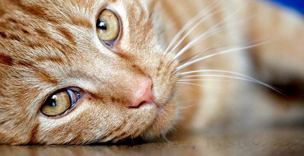 services_cat